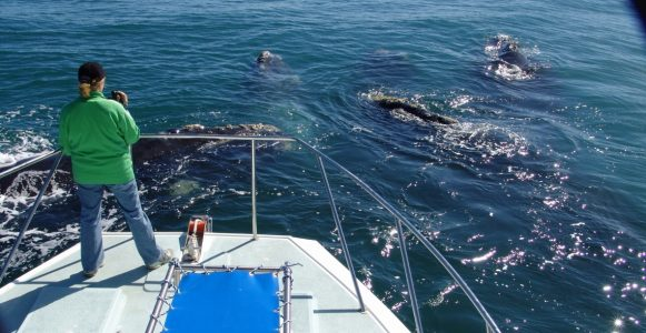 Boat based whale watching in De Kelders